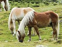 Análisis clínico en ganado equino