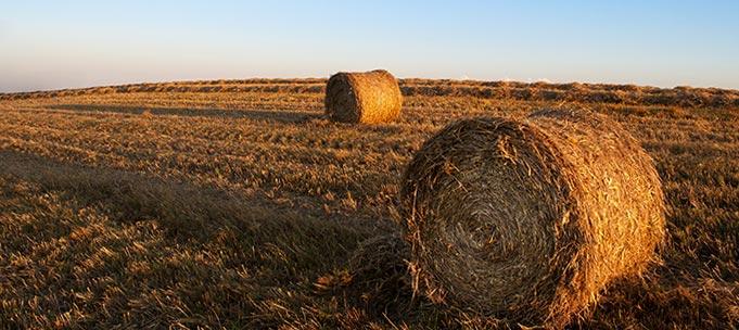 Analisis nutricional para ganadería - Forrajes
